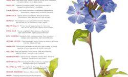 FÓRMULAS BACH - El Poder de las Flores concentrado en un Elixir