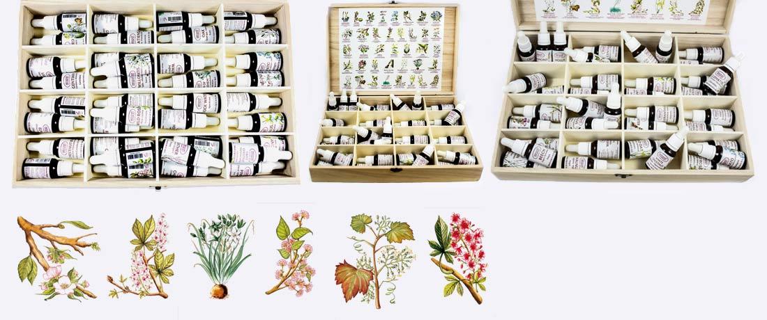 Terapia Floral: Flores de Bach