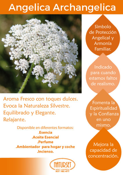Angelica Archangelica - Armonía Familiar - Naturset Salut i Cosmètica